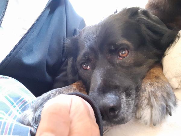 愛犬Rudy